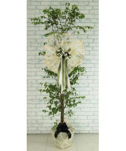พวงหรีดต้นไม้ (โมก) แบบที่72-4
