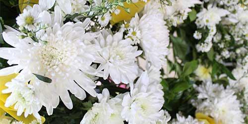 เบญจมาศดอกไม้ยอดนิยมส่วนสำคัญของพวงหรีด