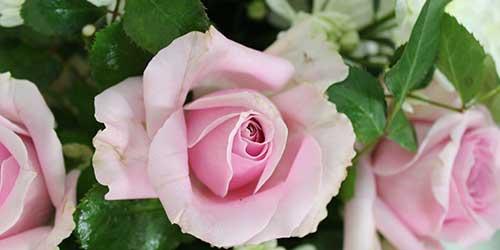 7ดอกไม้ความหมายดี สำหรับจัดพวงหรีดดอกไม้สด