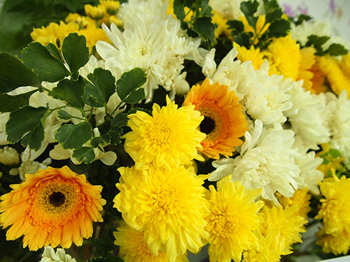 พวงหรีดดอกไม้สด ดอกเยลบีร่า